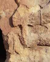Detailed image of the fan-shaped top of a rod in raised relief (stone)