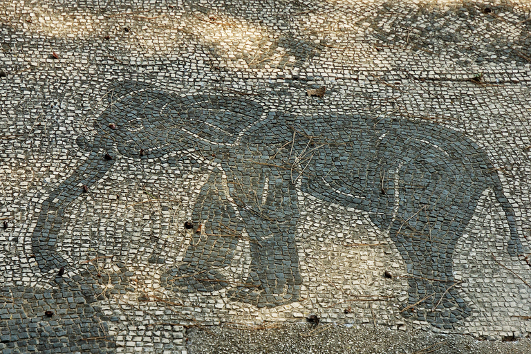 Photo of a mosaic pavement made of white and black tesserae. An elephant is drawn in profile.