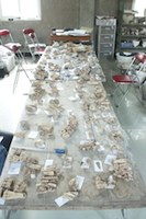 Photo of an archaeological work room featuring a long table on which excavated bones and other artifacts are placed.